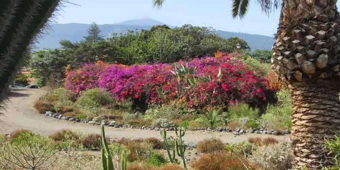 Wanderweg umgeben von bunten Blumen