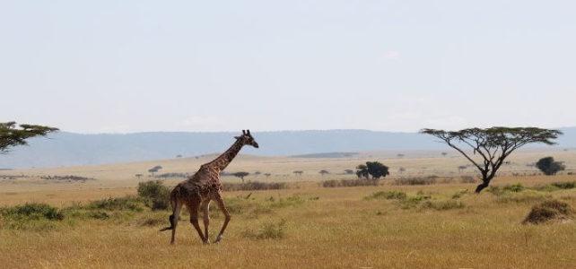 Tansania – für Individualreisen aber auch für Badeurlaub geeignet