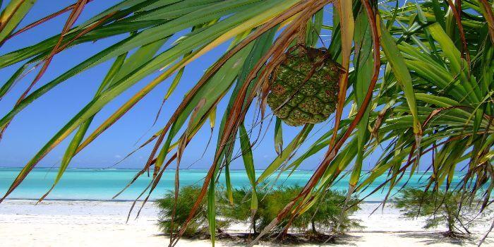 Palmenblätter und Meer