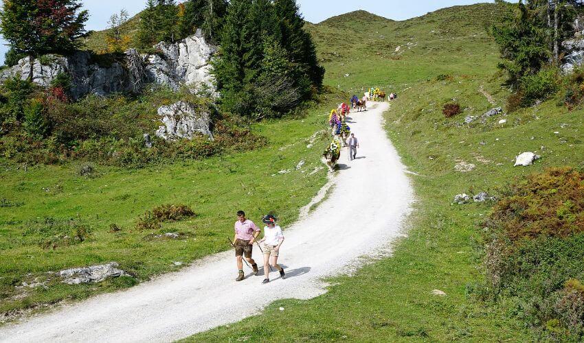 Ein paar Menschen spazieren auf einem Wanderweg auf einer Alm in Salzburg.