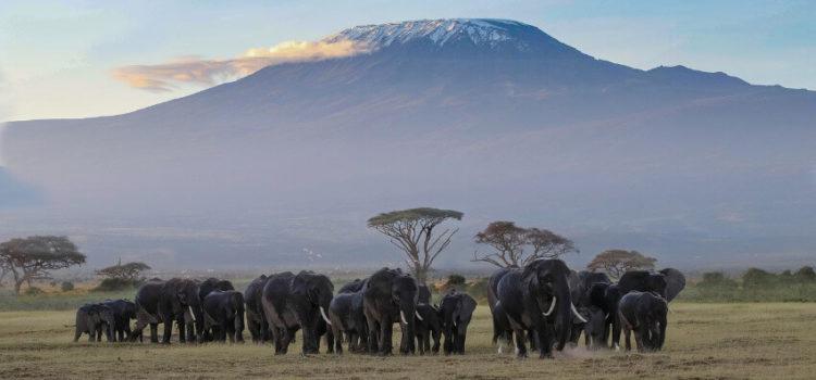 Eine Reise zum Kilimandscharo