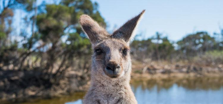 Mietwagenrundreise durch Australien auf eigene Faust oder fremd organisiert