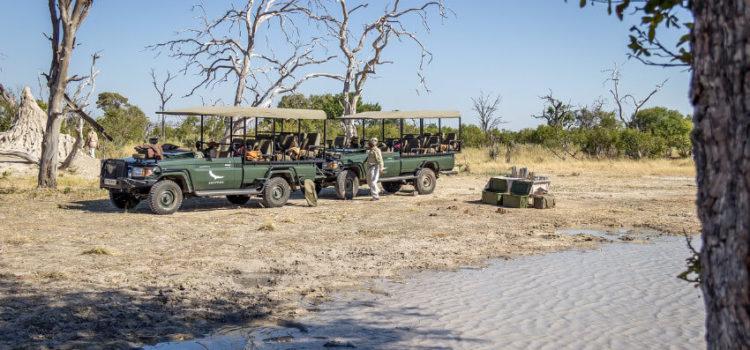 Safari von Kapstadt ausgehend