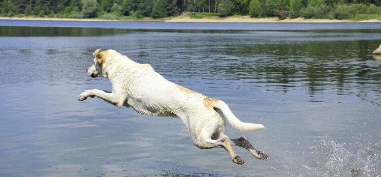 Urlaub mit Hund am See an der mecklenburgische Seenplatte